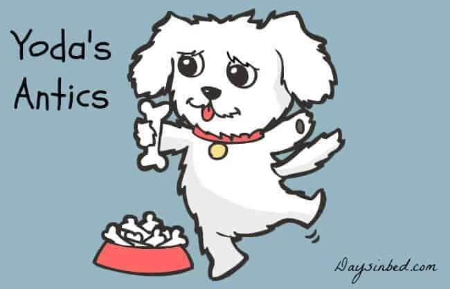 bichon Frise cartoon dog
