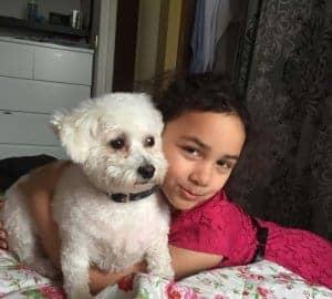 bichon dog and child