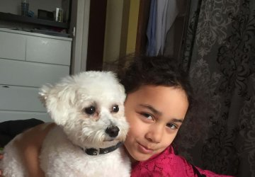 bichon dog and child