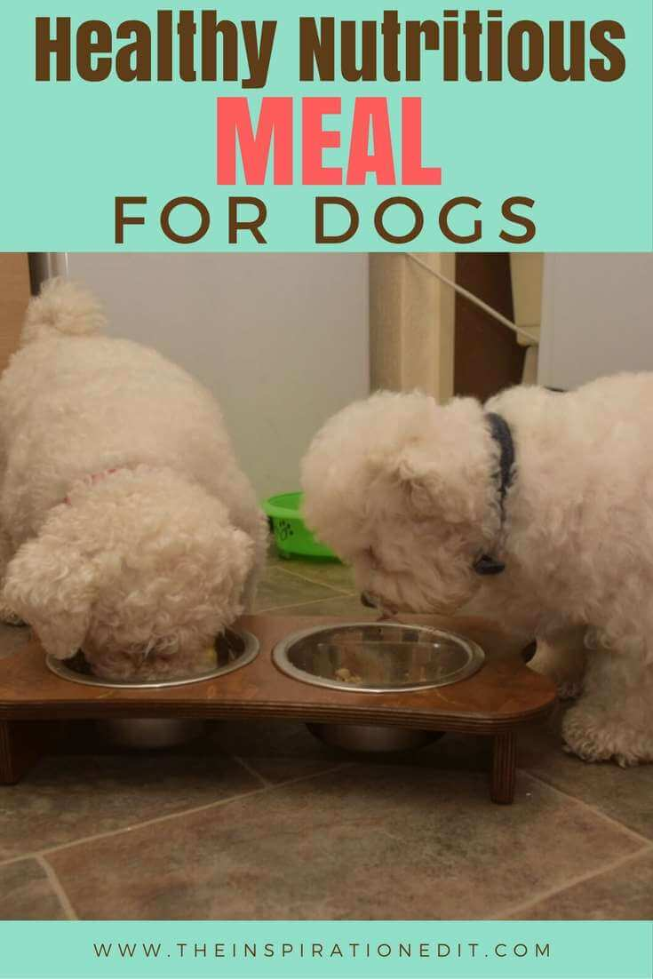 Give your pet the Healthy Nutritious Meal For Dogs.