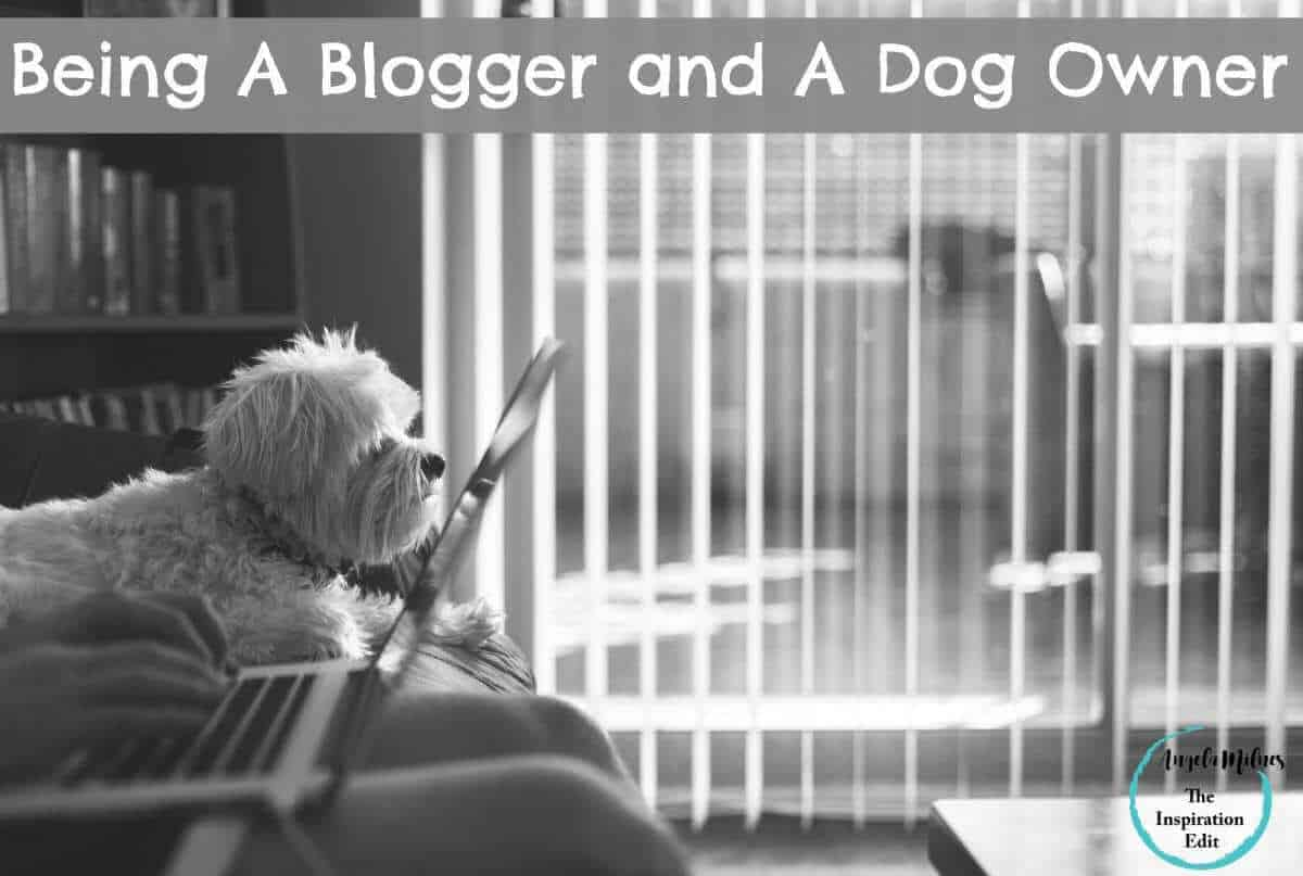 Being A Blogger and A Dog Owner