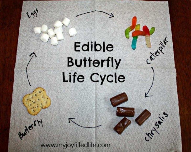 dog life cycle for kids