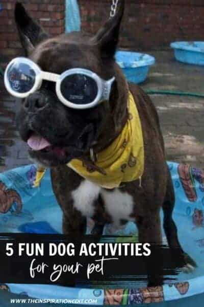 5 Fun Dog Activities For Your Pet