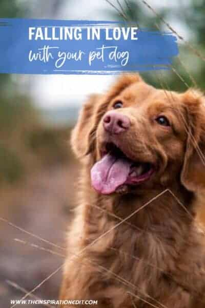 Falling In Love With Your Pet Dog