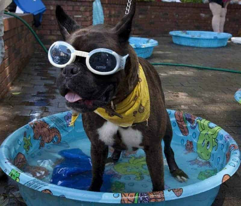 dog paddling pool