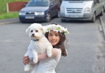 bichon dog and girl