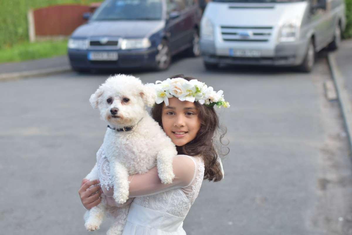 bichon dog and girl