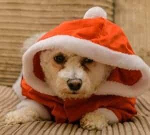 Dog Christmas Santa costume