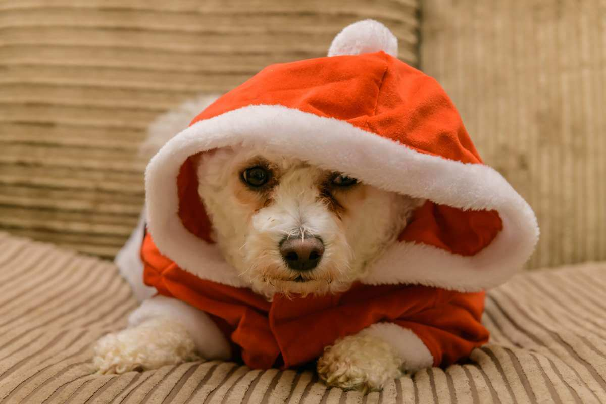 Dog Christmas Santa costume