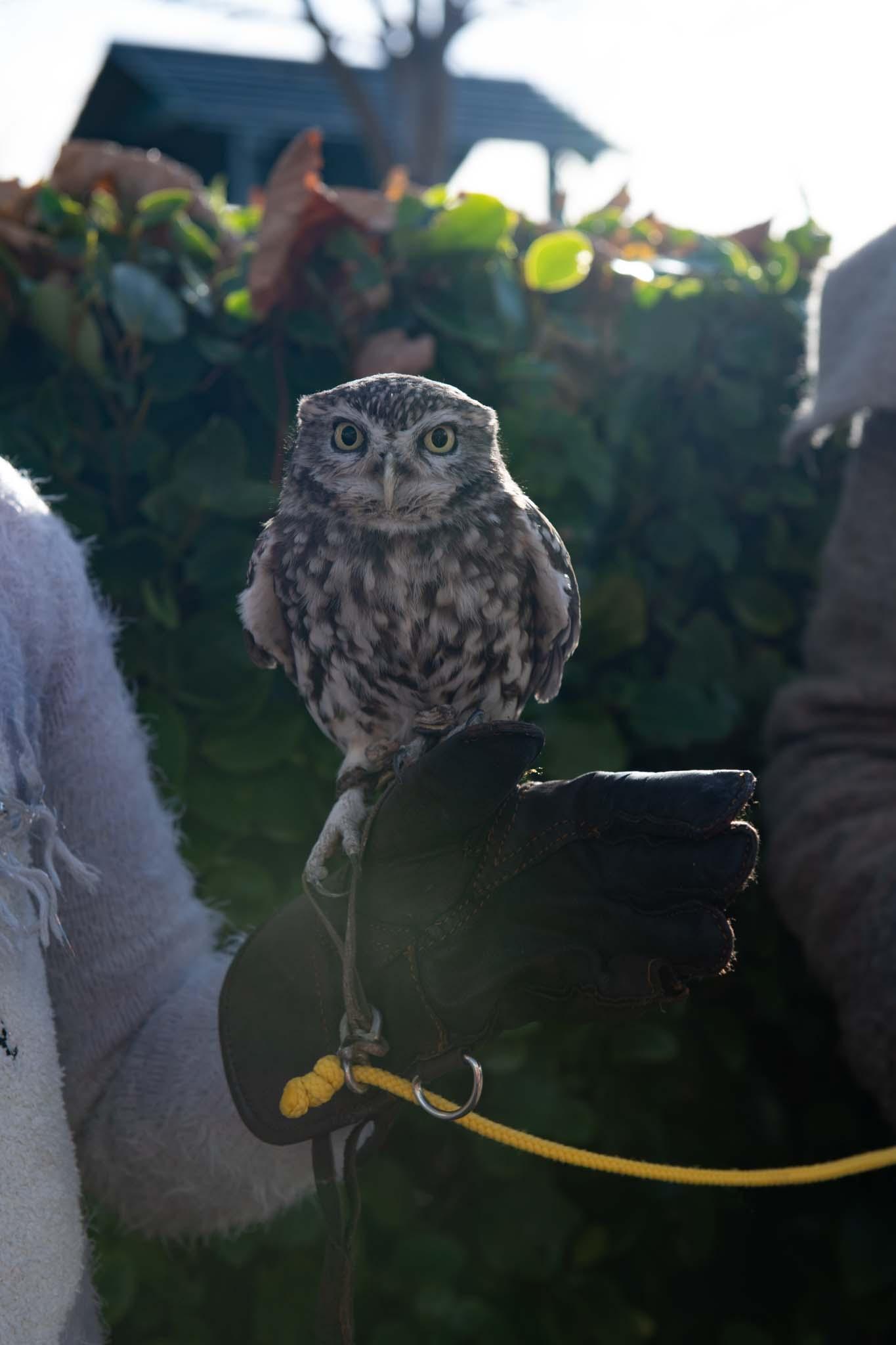 owls at affinity lancashire shopping centre