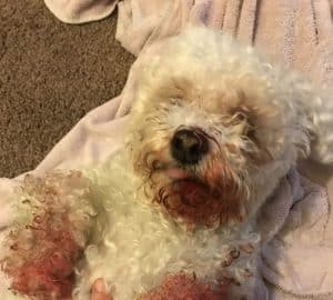 casper the dog bleeding