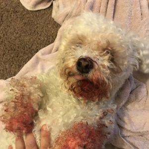 casper the dog bleeding