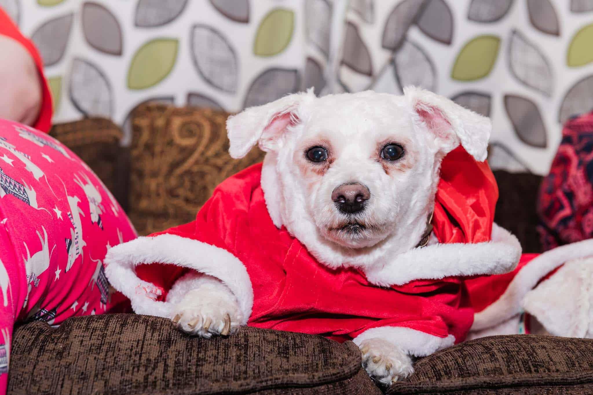 yoda's santa dog costume festive season