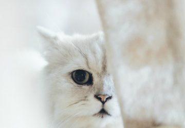 cat abuse