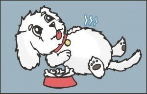 bichon frise dog tooth extraction experience