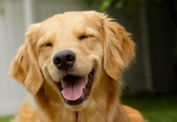 dog happy and healthy
