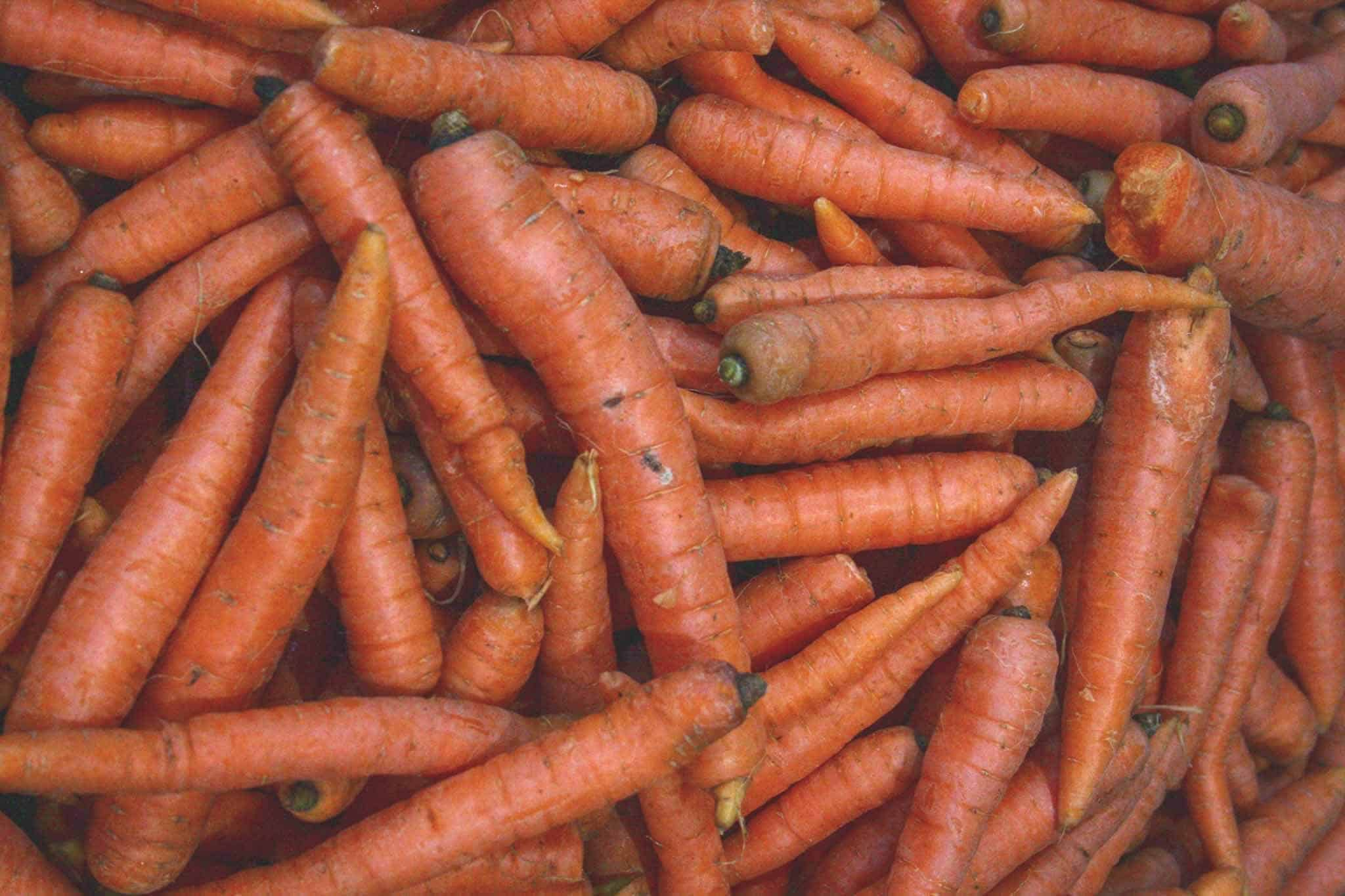 Are-carrots-safe-for-dogs