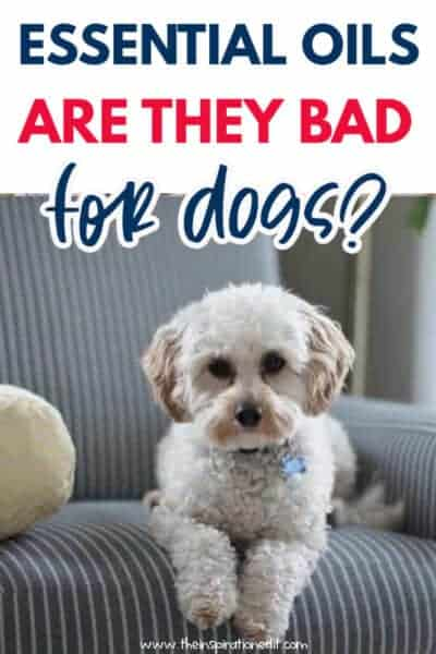 are essential oils bad for dogs
