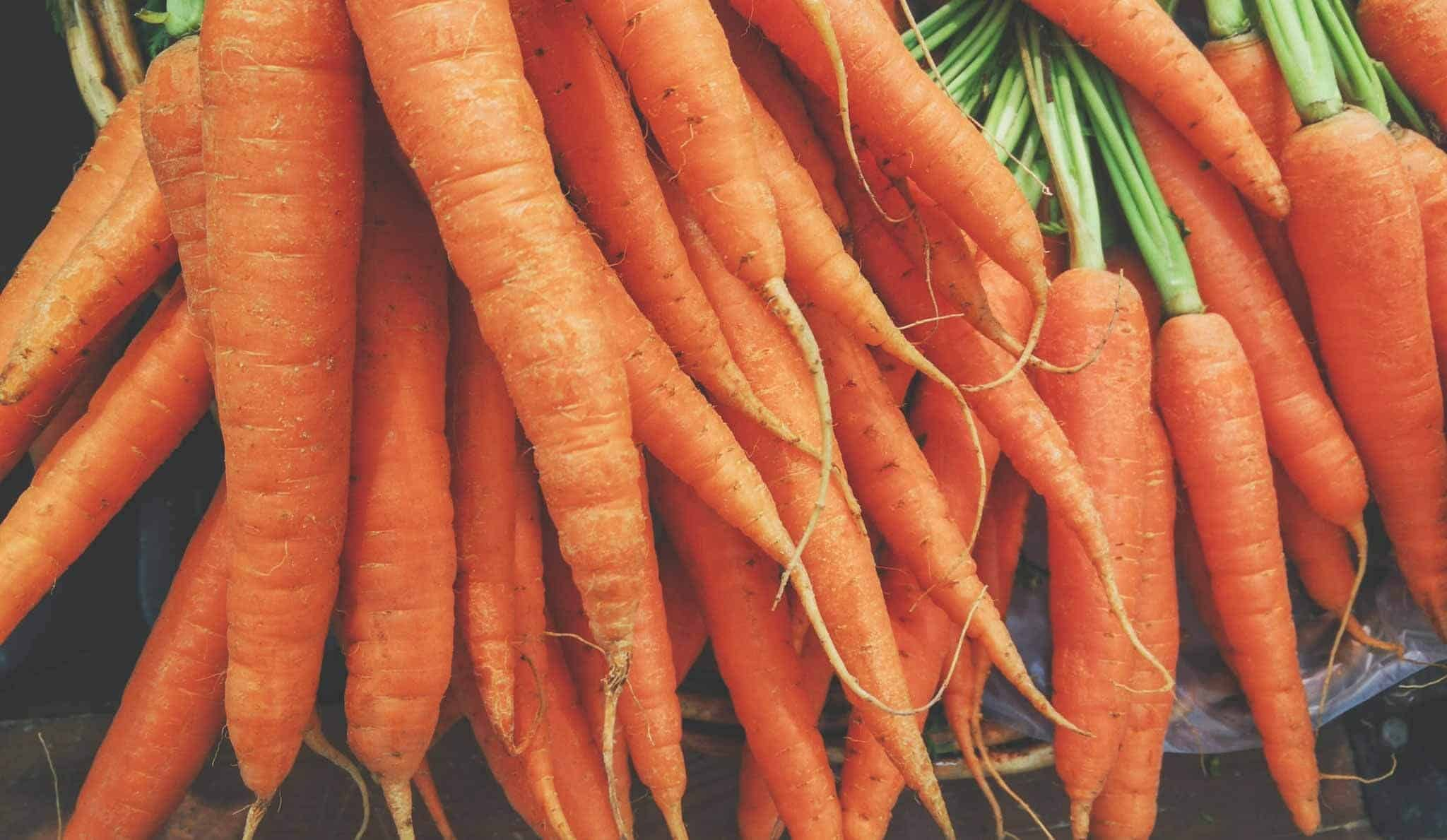 Raw-carrots-are-a-fantastic-vegetable-to-help-clean-your-dogs-teeth