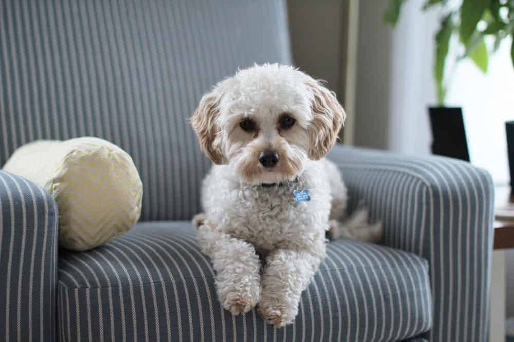Toxic Essential Oils For Dogs