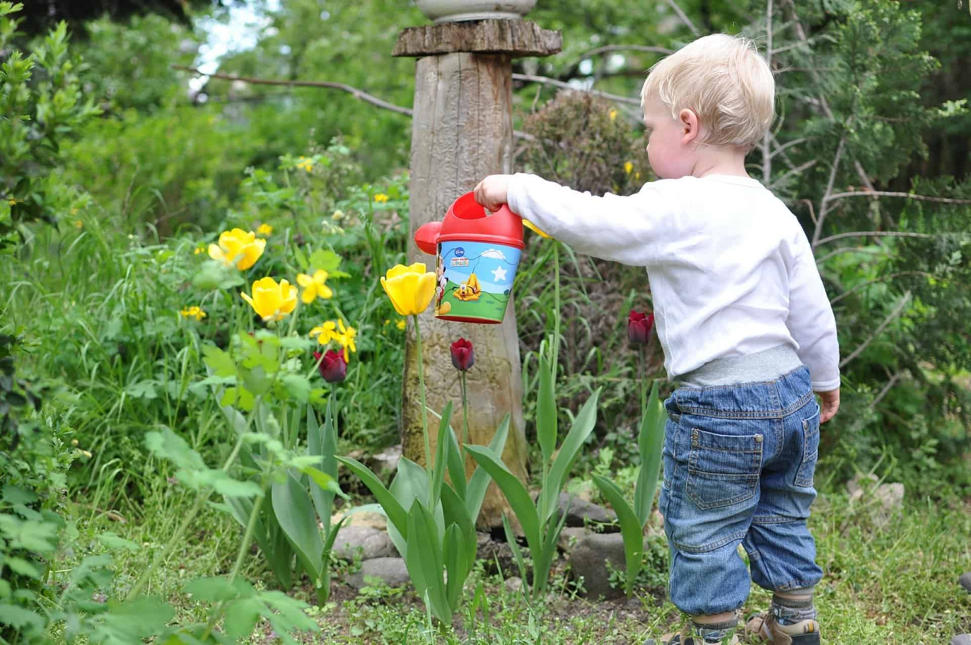 wild life friendly garden for kids