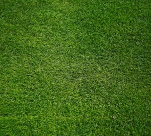 grass seed for your home
