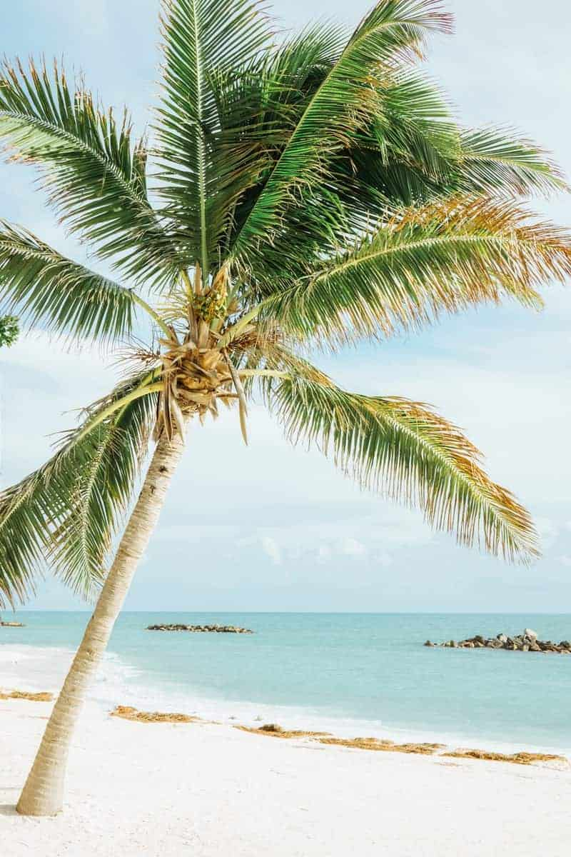 Top Key West Activities With Kids