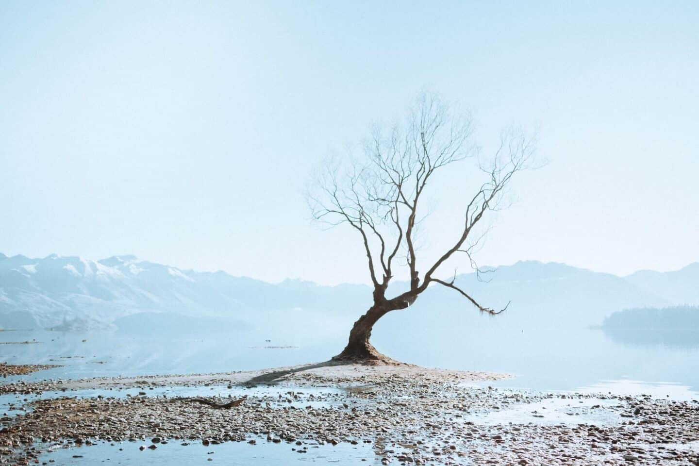Lonely-Tree-Lake-Wanaka-tide-out