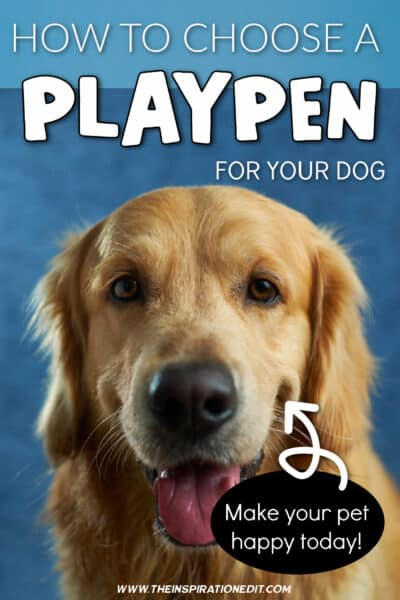 HOW TO CHOOSE A DOG PLAYPEN
