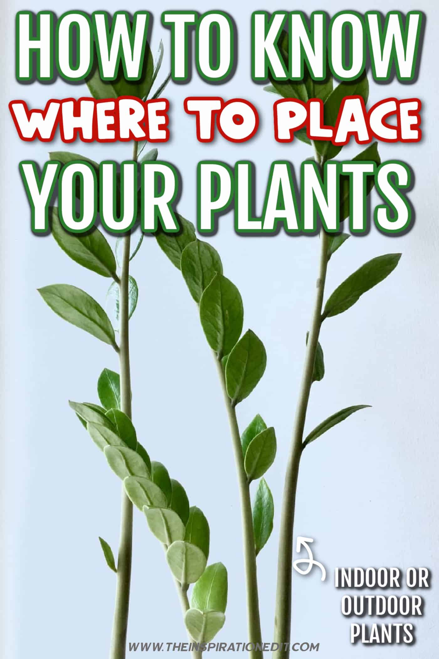 PLANTS WHERE TO PLACE THEM
