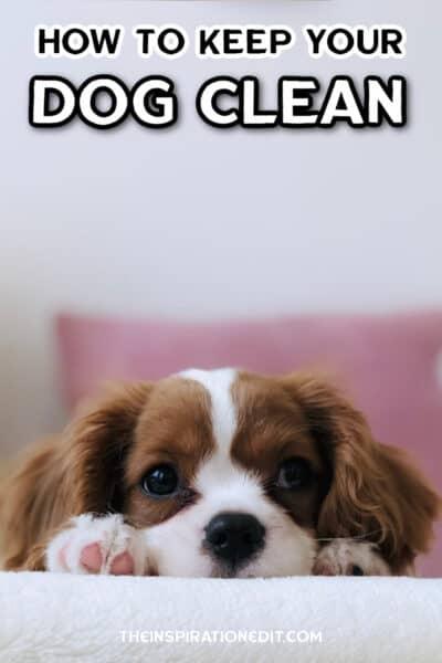 DOG-CLEAN-
